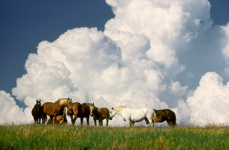 South Dakota Horses at Pasture