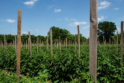 Professional Agriculture Photography