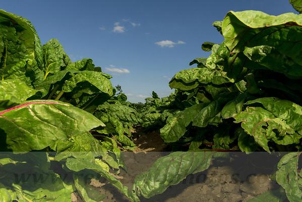 Organic Farm in Austin, Texas