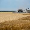 Cutting Wheat