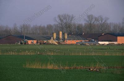 pig farm,varkenshouderij,ferme de cochons,Veerle,Belgium,België,Belgique