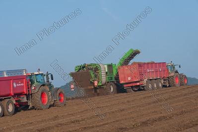 potatoe harvest,aardappel rooien,récolte de pommes de terre
