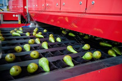 H-pack,fruitsorting and packing station,fruit sorteer- en pakstation,station de trier et de emballerdes fruits,washing,wassen,laver