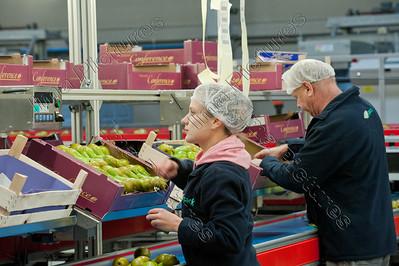H-pack,fruitsorting and packing station,fruit sorteer- en pakstation,station de trier et de emballerdes fruits,sorting,sorteren,trier