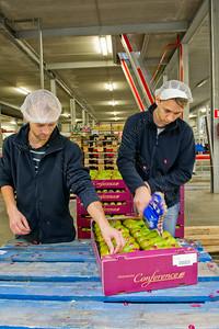 H-pack,fruitsorting and packing station,fruit sorteer- en pakstation,station de trier et de emballerdes fruits,labeling