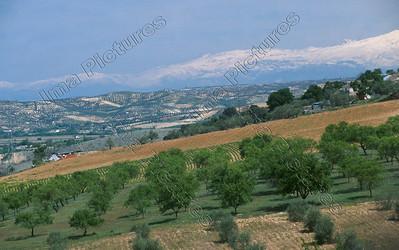 orange platation,sinaasappellplantages,plantation d'oranges,Spain,Spanje,Espagne