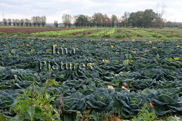 horticulture tuinbouw