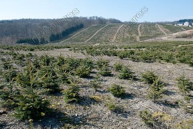 tree nursery,boomkwekerij,pépinière