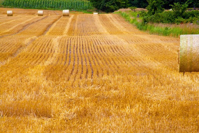 Rolling field of freshly harvested hay.