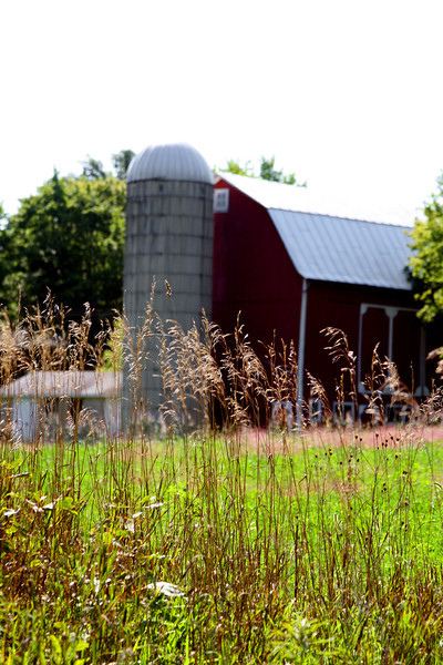 Striking barn against green fields.