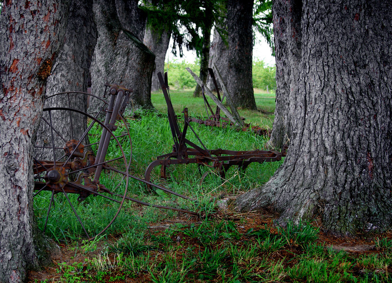 Old farm implements against an ancient forest.