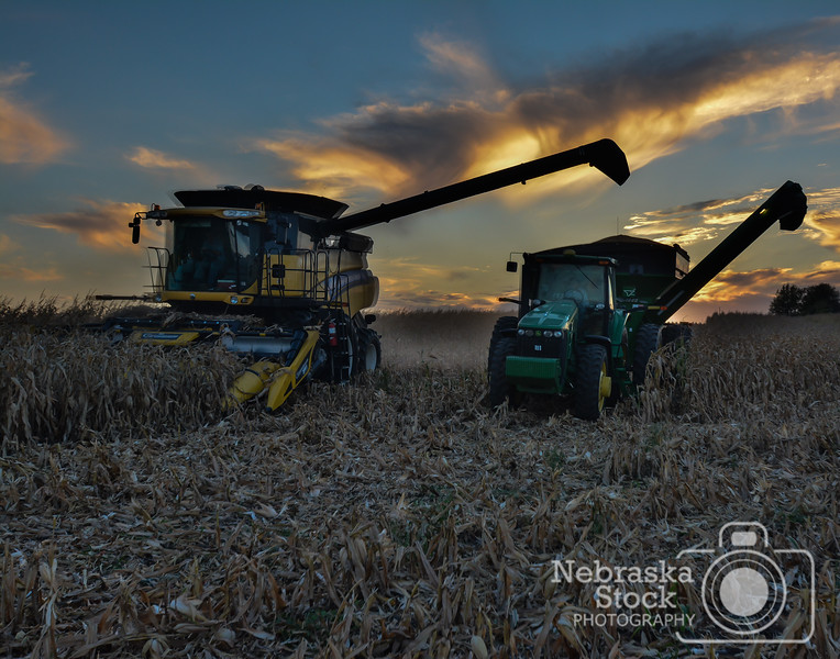 Langenberg Farms of Norfolk, harvests a corn field Wednesday night east of Norfolk. <br /> Photo by Aaron Beckman