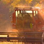 Combining Soybeans, Saginaw County, MI