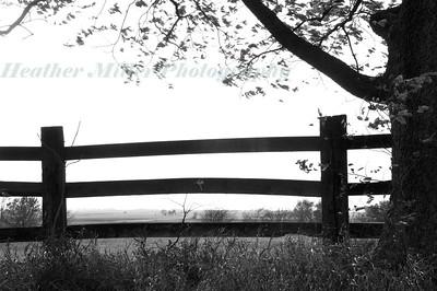 Fence_0120--BW