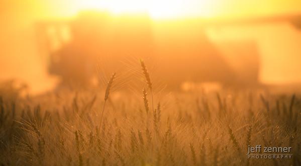 Harvesting Wheat in Nezperce, Idaho, with a John Deere 9600 Combine