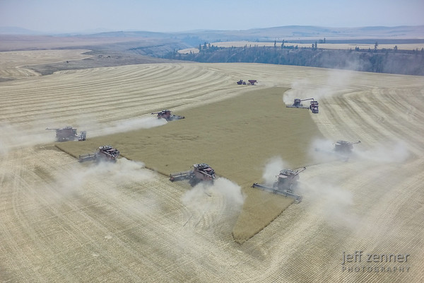 Wheat Harvest x 7