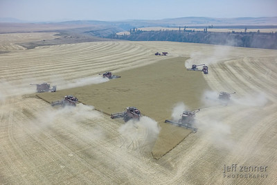 Wheat Harvest x 7