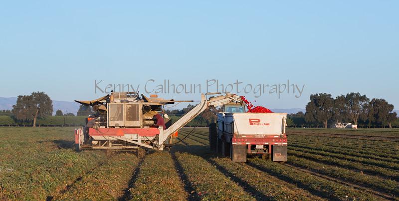 2019 PT Harvesters-6325