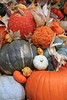 Pumpkins, Gourds, Squash, Indian Corn 4