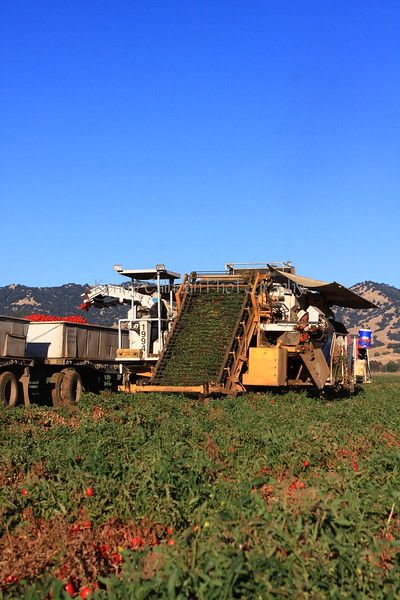 Rominger Brothers Processing Tomato Harvester 2
