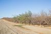 CA Drought_N5A8949