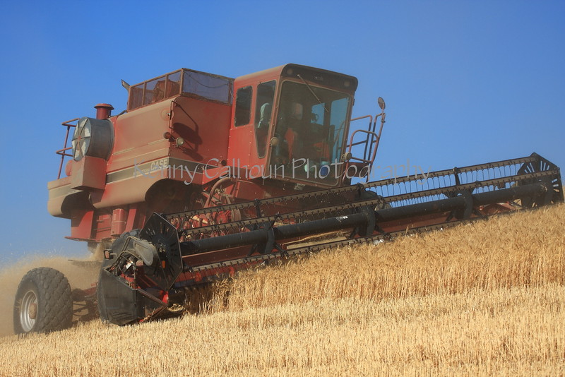 Side Hill Harvester in Barley 1