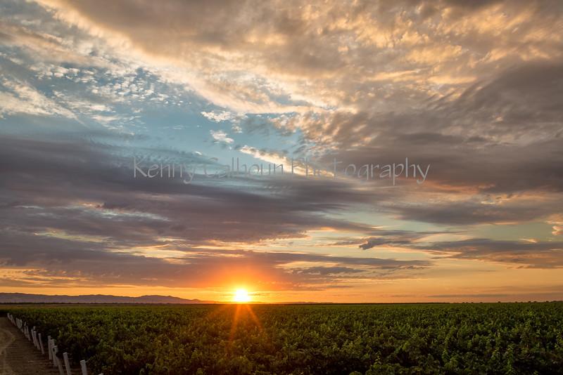 Cardella Winery_N5A7712-Edit-Edit