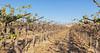 CA Drought_N5A8821-Edit