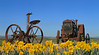 2875VivezaOld Tractors andDaffodils