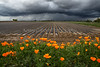 Vierra Watermelons Poppies Rain_N5A6722-Edit