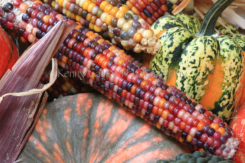 Pumpkins, Gourds, Squash, Indian Corn 1