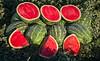 Watermelons_N5A7169