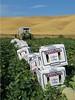 Westside Cantaloupe Harvest