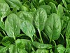 Cut Spinach
