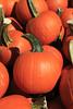 IMG_6526_Pumpkins_Perrys
