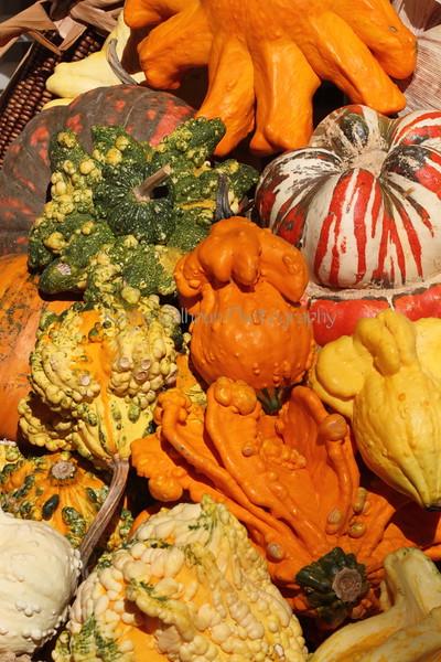 Pumpkins and Gourds 1