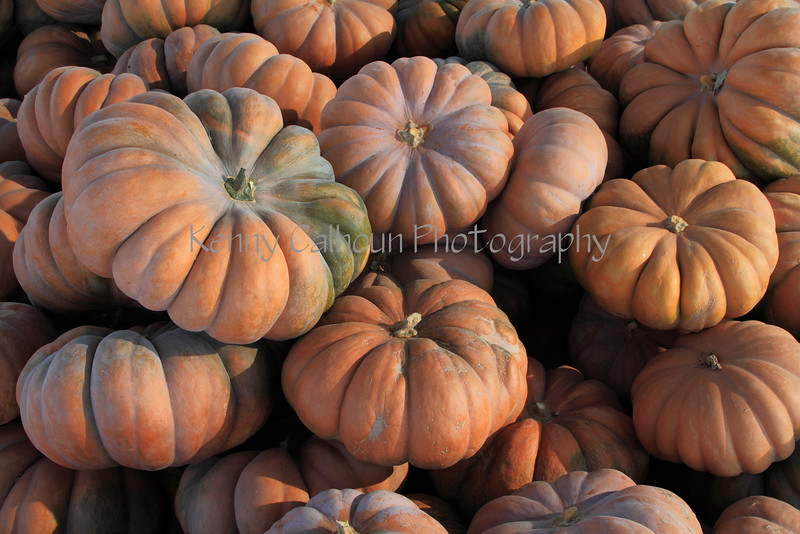 IMG_4902Fairytale_Pumpkin