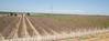 CA Drought_N5A9055