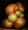 Heirloom Tomatoes Back Yard_N5A8315