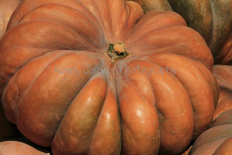 IMG_5002Fairytale_Pumpkin