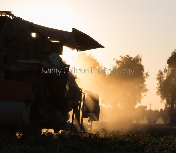 2019 PT Harvesters-6302