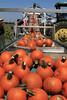 IMG_5067Pumpkin_Harvest