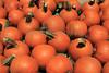 IMG_5064Pumpkin_Harvest