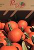 IMG_6547_Pumpkins_Perrys
