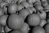 IMG_7839_Pumpkins
