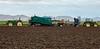 Yuma Lettuce Harvest--7