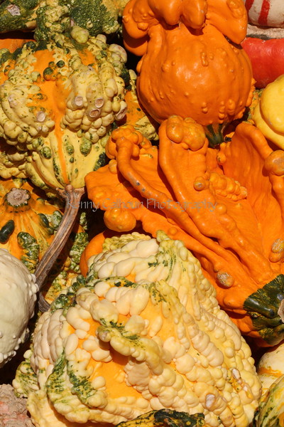 Pumpkins and Gourds 3