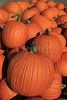 IMG_7834_Pumpkins