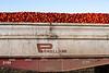 2019 PT Harvesters-6433