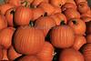 IMG_7840_Pumpkins